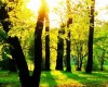 alberi-blog-verde.jpg